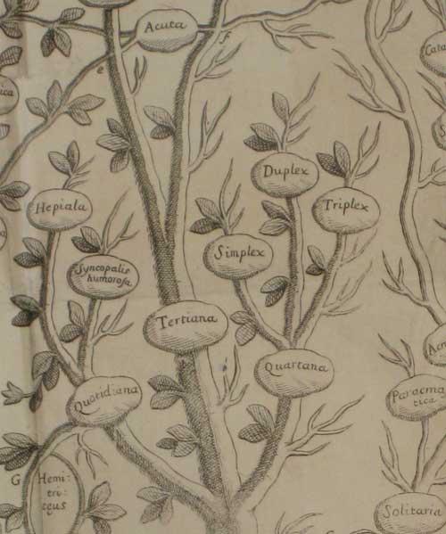 detail-of-Tree